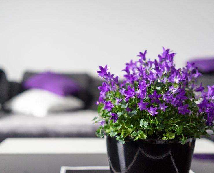 Home staging, czyli jak podnieść wartość mieszkania?